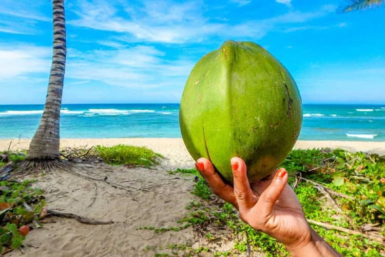 Coconut Water on the Beach